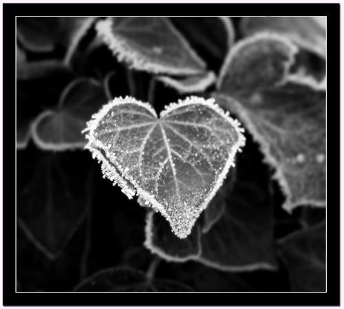 coeur-de-glace