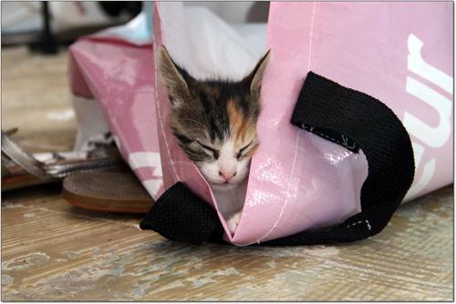 Mademoiselle Azerty dort dans un sac