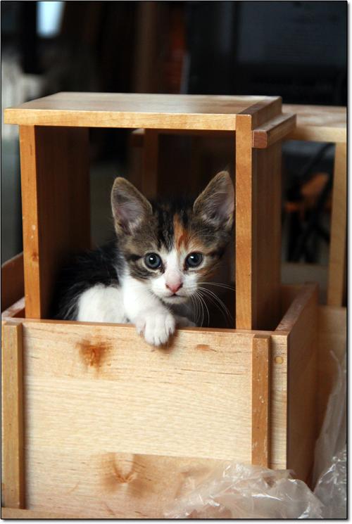 Mademoiselle Azerty trouve refuge dans des étagères à CD
